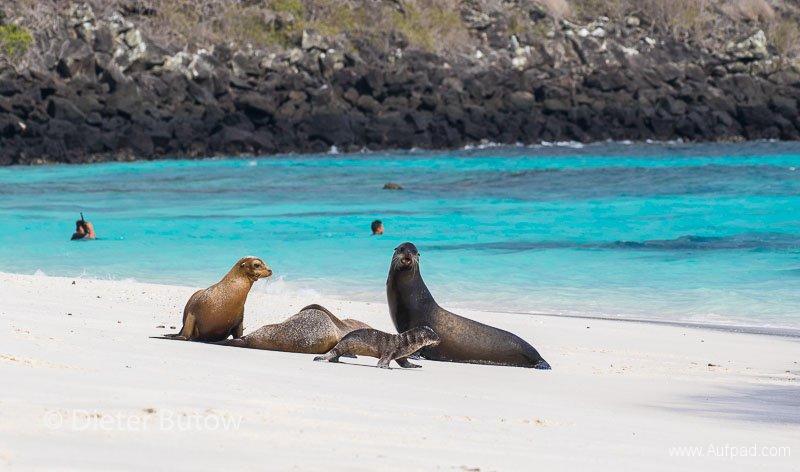Gal A5 Española -Punta Suarez & Playa Gardner-4