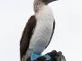 Galapagos B 4-8