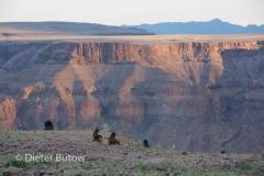 Namib-Kalahari Apr2014-108