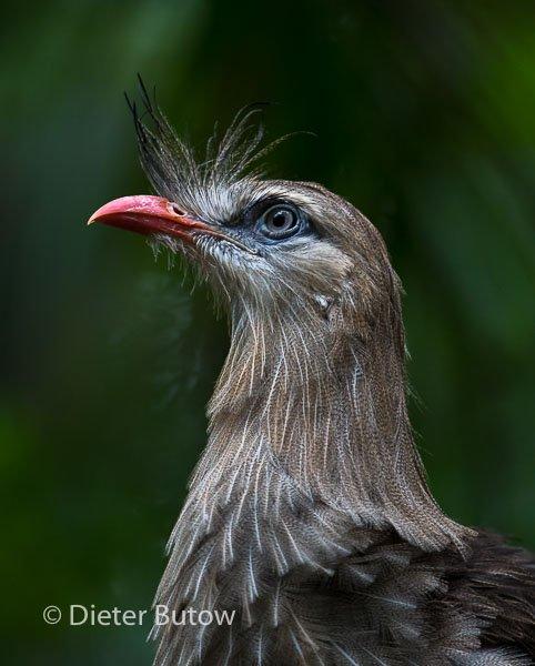Parque das Aves-13