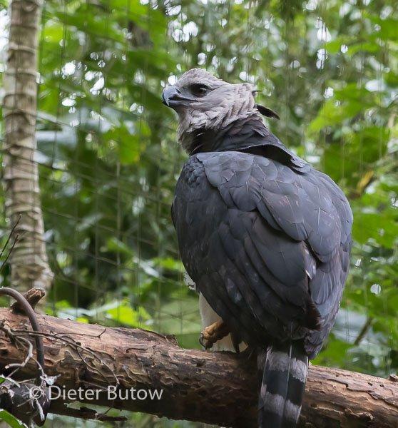 Parque das Aves-17