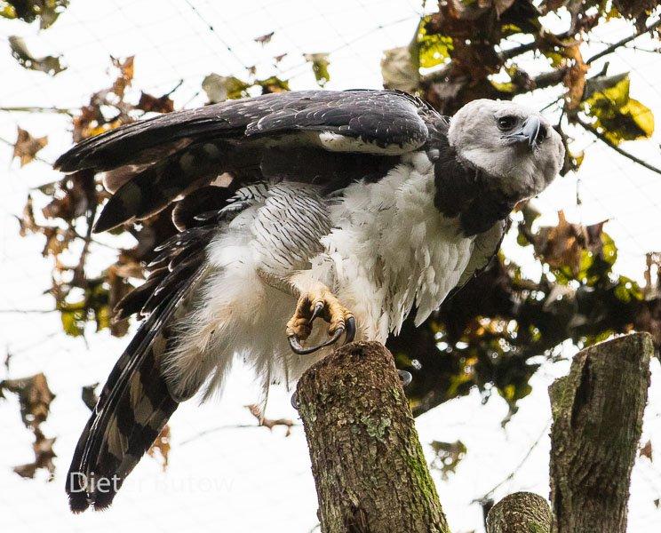 Parque das Aves-18