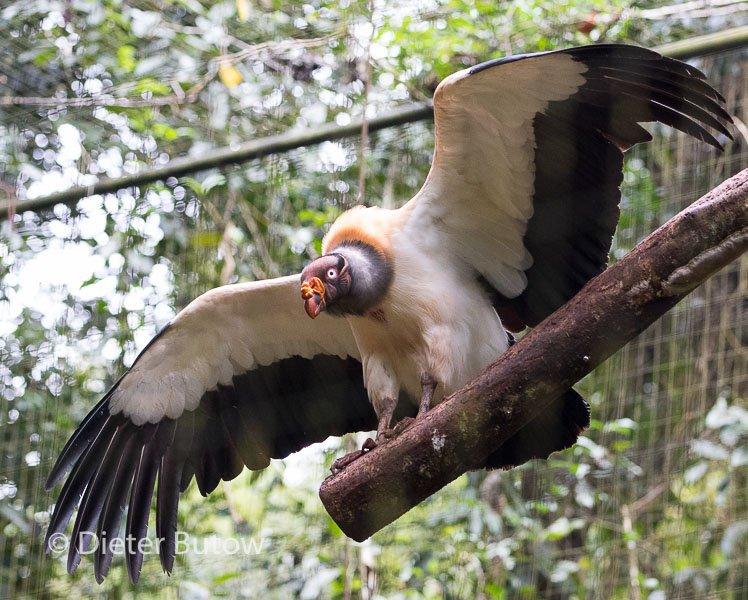 Parque das Aves-19