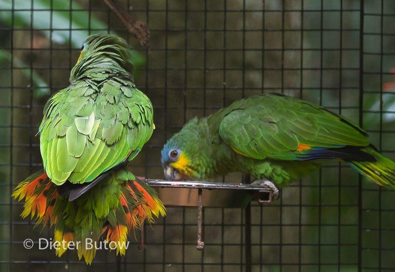 Parque das Aves-23