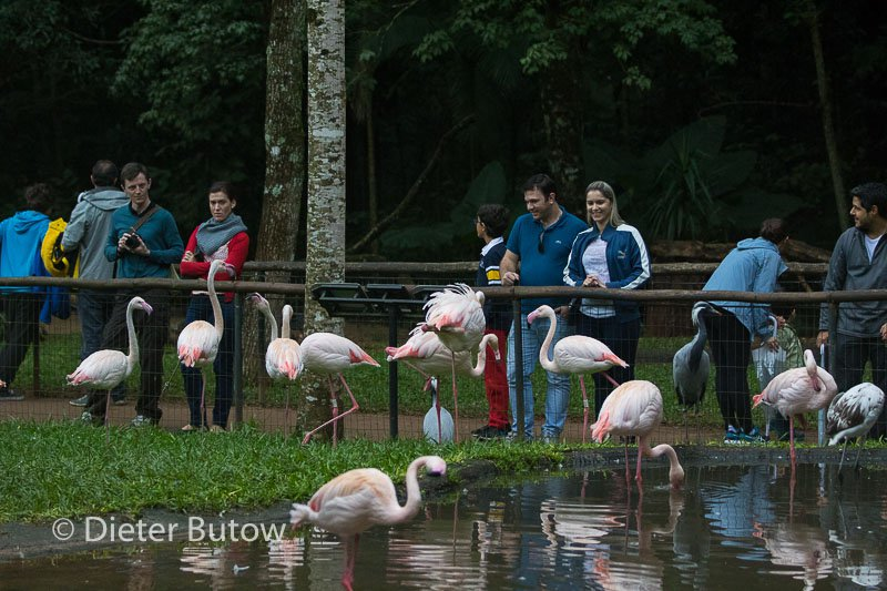 Parque das Aves-33