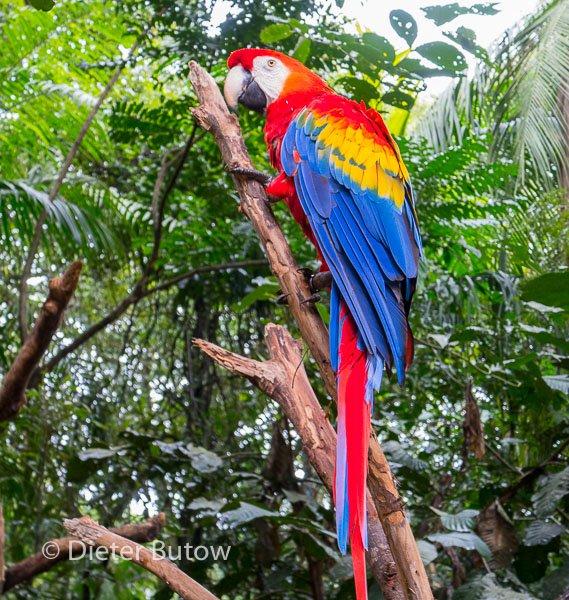 Parque das Aves-7