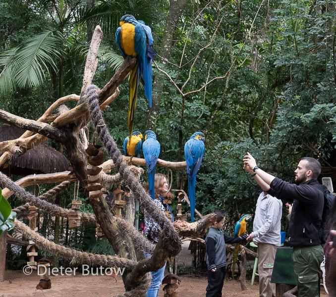 Parque das Aves-8