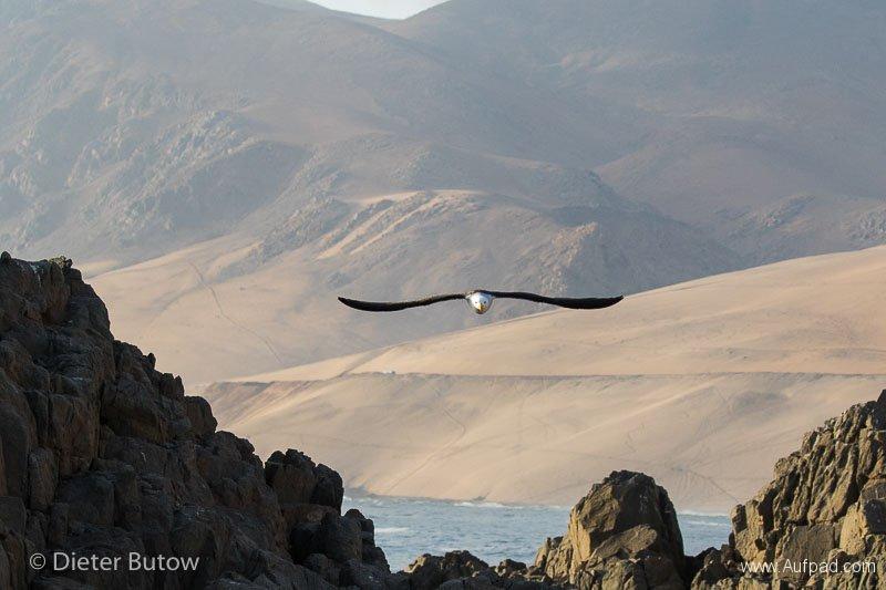 Peru Colcha Cañon and South Coast-26