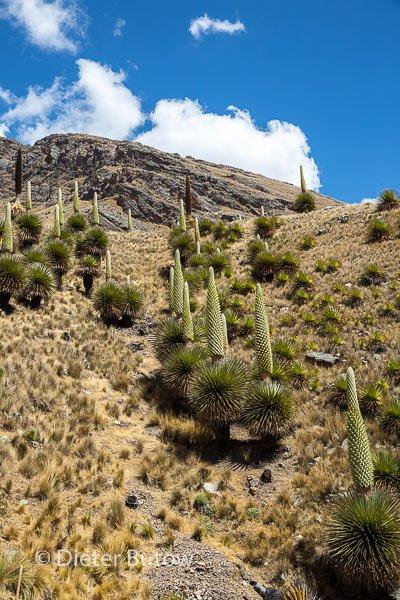 Parque Huascaran A-145