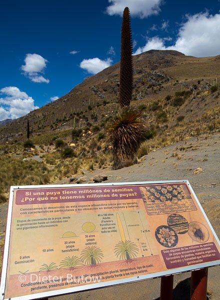 Parque Huascaran A-146