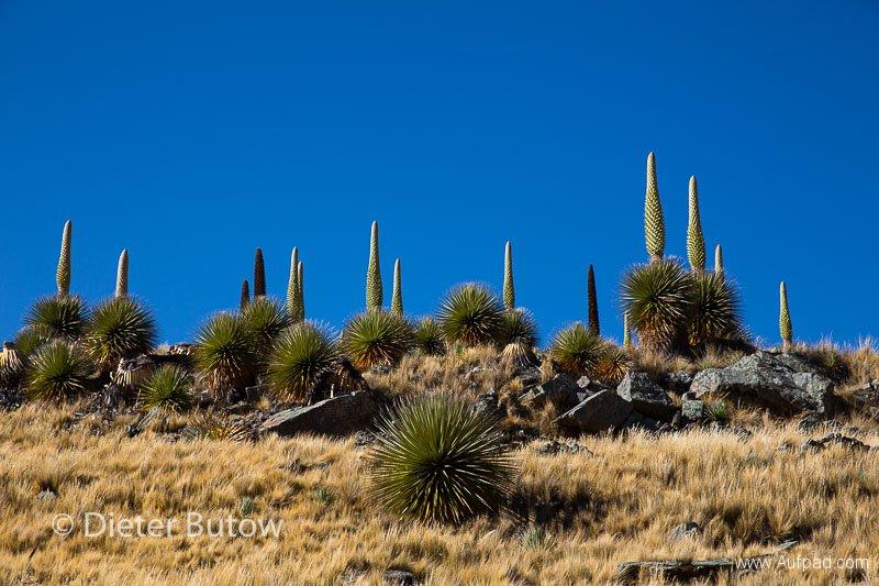 Parque Huascaran A-133